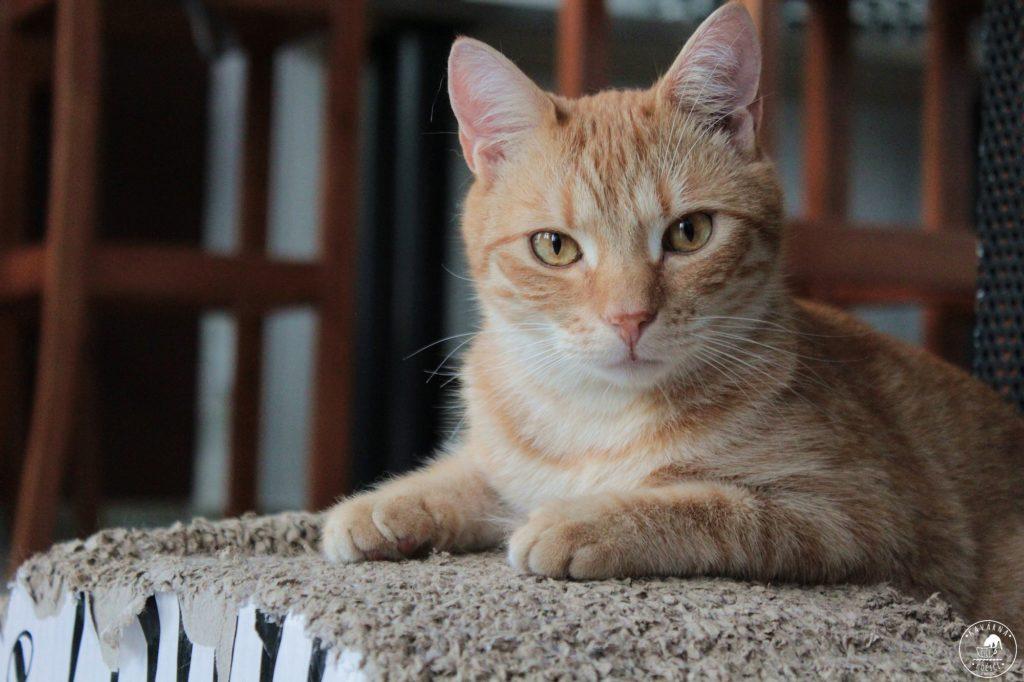 Kocour Barney kavárna kočičí praha