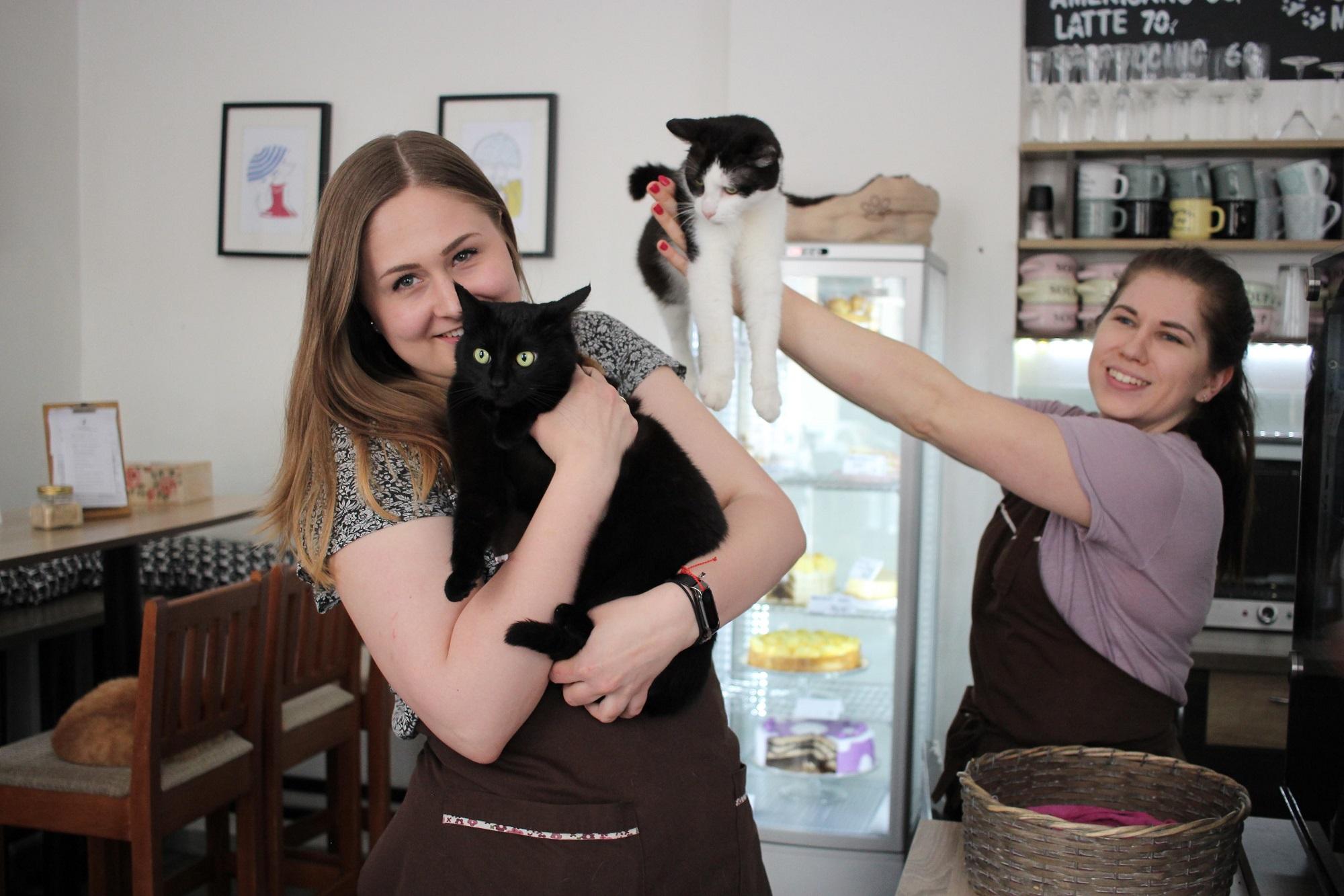 volná místa kavárna kočičí