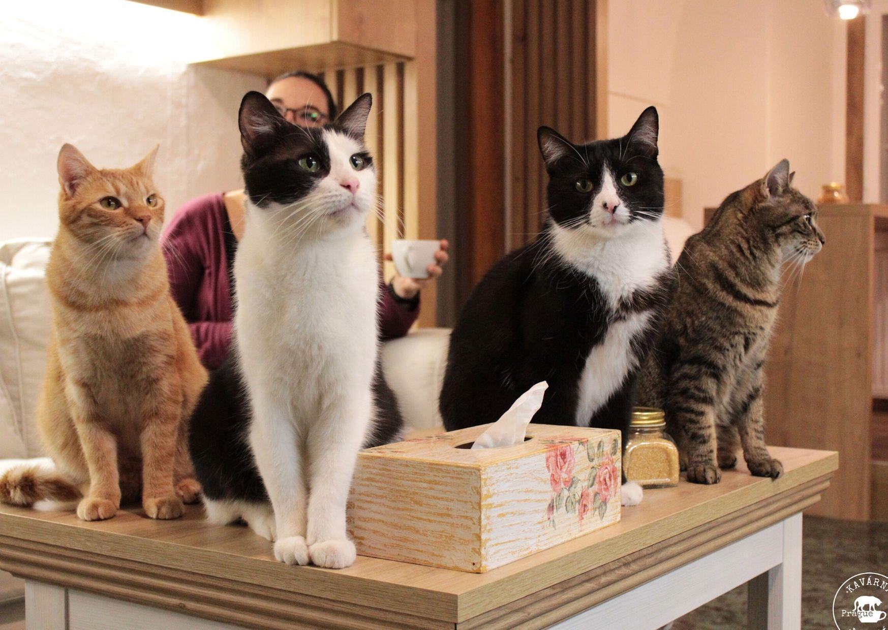 kavárna kočičí interiér