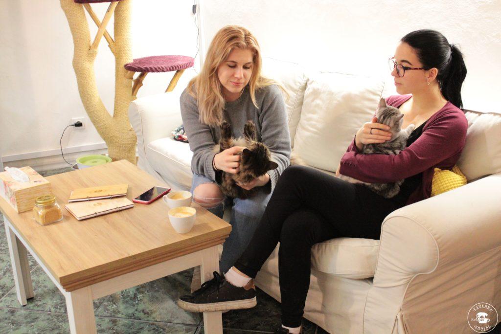kočičí předení kavárna kočičí