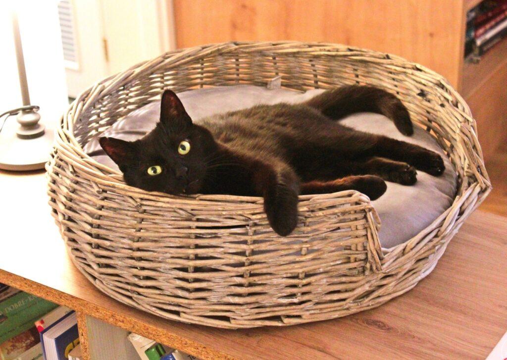 kavárna kočičí blog